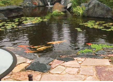 Aquatic Plants, Fish and Pond Supplies
