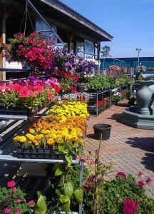 Retail Plant Nursery – Full Service